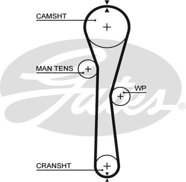 GATES FleetRunner™ Micro-V® Stretch Fit® 5577XS Timing Belt Length: 905mm, Width: 23,4mm