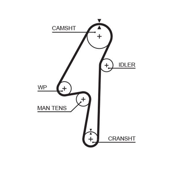 GATES FleetRunner™ Micro-V® Stretch Fit® 5580XS Timing Belt Length: 1257mm, Width: 28mm