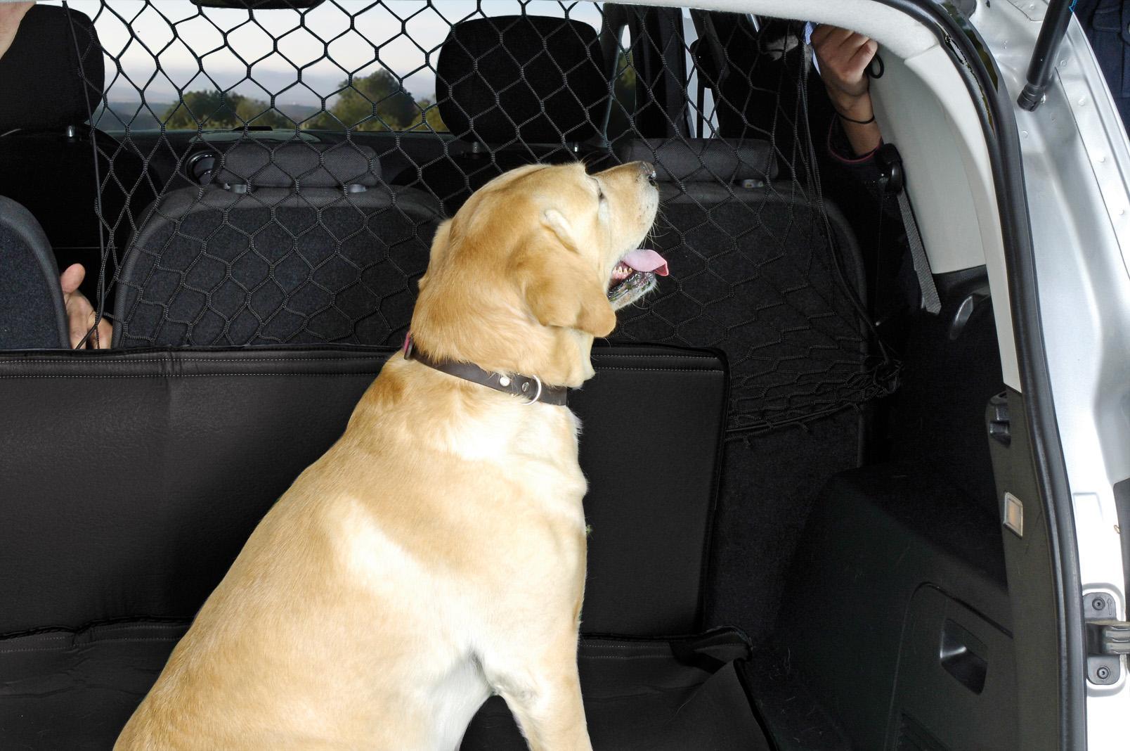 Filet de coffre pour chien 01013084 DBS 01013084 originales de qualité