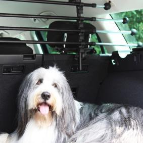 Auto hondenrek 127503