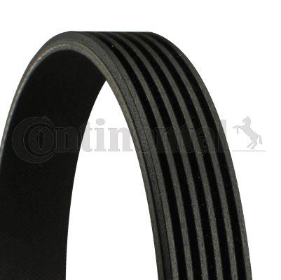 V Ribbed Belt CONTITECH 6PK1699 expert knowledge