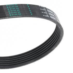 V-Ribbed Belts with OEM Number 1 013 202