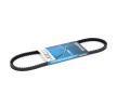 DAYCO Keilriemen 10A0735C für AUDI 100 (44, 44Q, C3) 1.8 ab Baujahr 02.1986, 88 PS