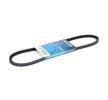 DAYCO Keilriemen 11A0865C für AUDI COUPE (89, 8B) 2.3 quattro ab Baujahr 05.1990, 134 PS