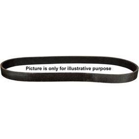 Keilrippenriemen Länge: 1125mm, Rippenanzahl: 6 mit OEM-Nummer 036145933G