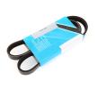 ALFA ROMEO V-Ribbed Belts: MAPCO 250980